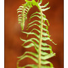Seal Bay Fern - Close-Up Photography