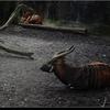 dsc 4645-border - Burgers Zoo