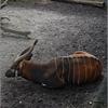 dsc 4651-border - Burgers Zoo