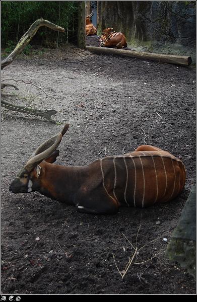 dsc 4651-border Burgers Zoo
