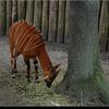 dsc 4673-border - Burgers Zoo