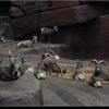 dsc 4787-border - Burgers Zoo