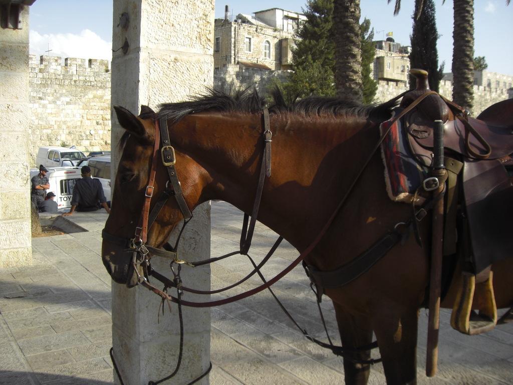 CIMG5033 - JERUSALEM 2009