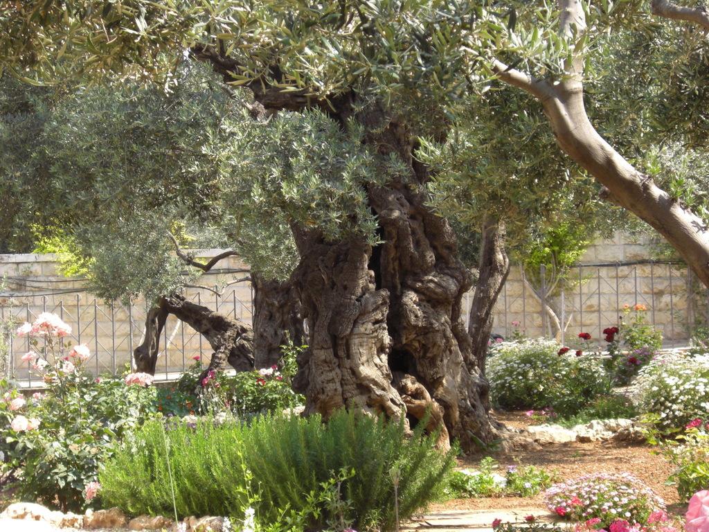 CIMG5151 - JERUSALEM 2009