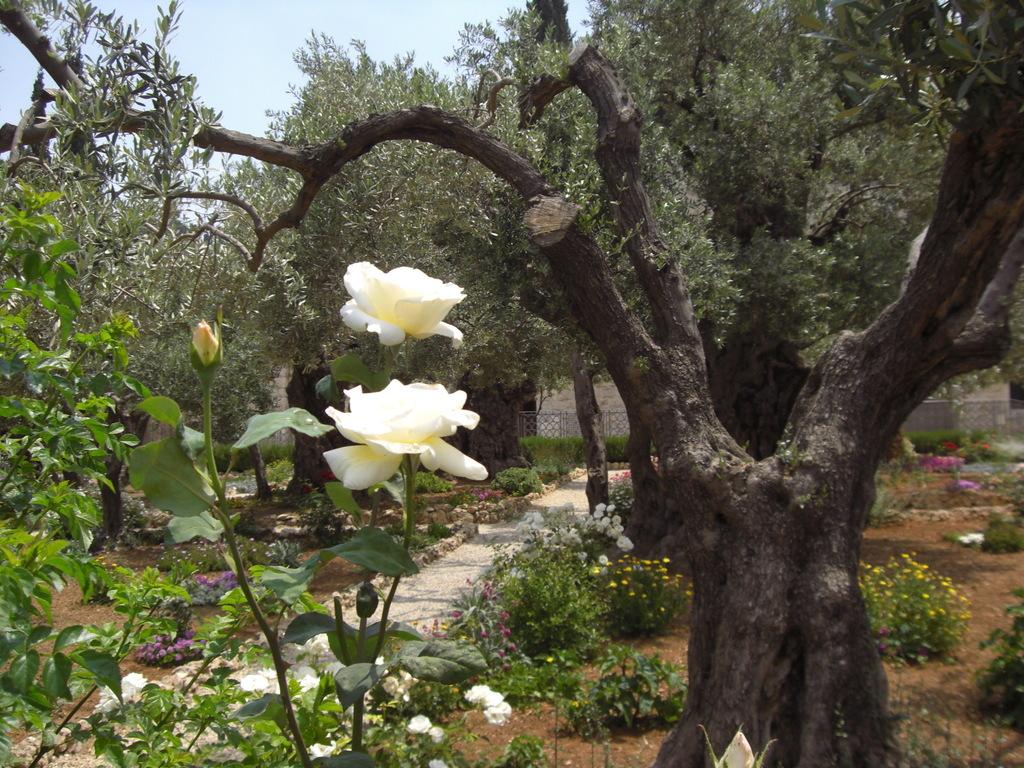 CIMG5220 - JERUSALEM 2009