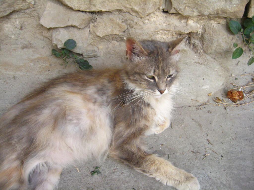 IMG 1754 - JERUSALEM 2009