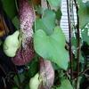 P1090536 - orchideëen
