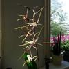 P1090514 - orchideëen