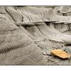 dinosuar park - Nature Images