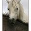 -Sukanen Horses - Saskatchewan