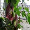 P1090560 - orchideëen