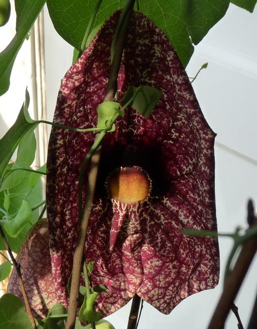 P1090557b orchideëen