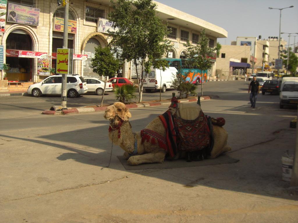 CIMG6033 - JERUSALEM 2009