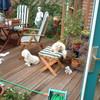 Vijverschoonmaak 24-08-03 20 - In de tuin 2003