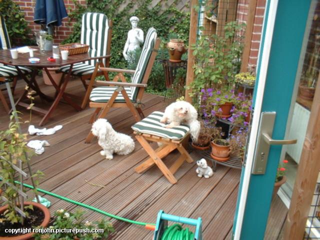 Vijverschoonmaak 24-08-03 20 In de tuin 2003