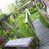 Tuin 23-06-09 - In de tuin 2009