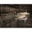 -Pompeii victim - Italy photos