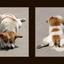 Pompeii Dog - Italy photos