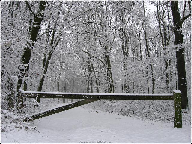Sneeuw1 Nature calls