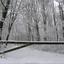 Sneeuw1 - Nature calls