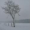 Sneeuw3 - Nature calls