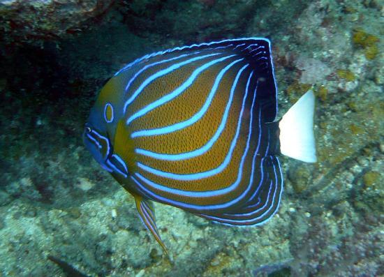 Ikan Pulau Perhentian