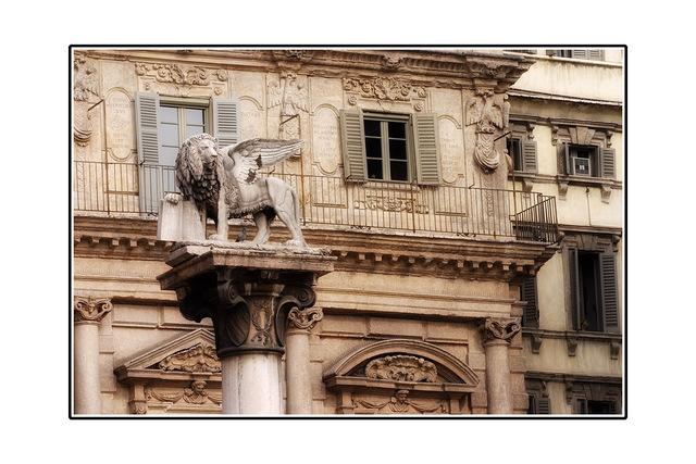 Verona Cat Italy photos