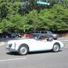 IMG 2814 - Cars