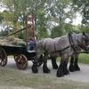2007 09 23 121 - power Horse