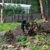 © René Vriezen 2009-07-18 #... - WWP 2 Burgers Zoo Arnhem za...