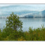 Tree and Ice - Alaska and the Yukon