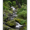 Glacier Gardens Rainforest - Alaska and the Yukon