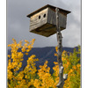 Yukon birdhouse - Alaska and the Yukon