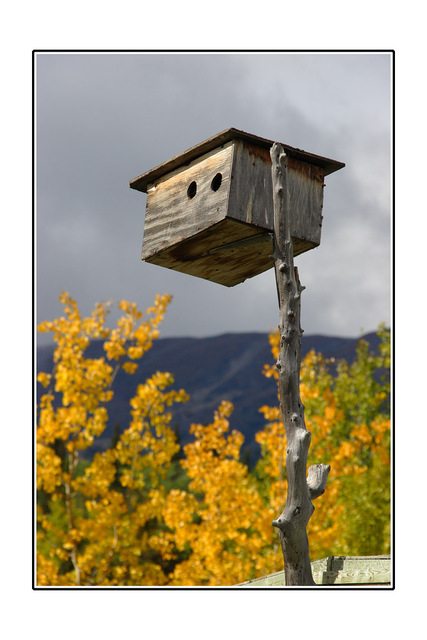Yukon birdhouse Alaska and the Yukon