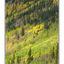 Yukon trees - Alaska and the Yukon