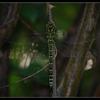 DSC 3487-border - Nature calls