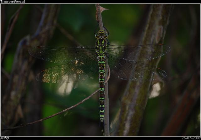 DSC 3487-border Nature calls