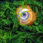 shell eye - 35mm photos