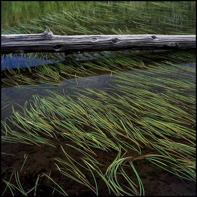 marsh 35mm photos
