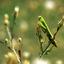 mantis - 35mm photos