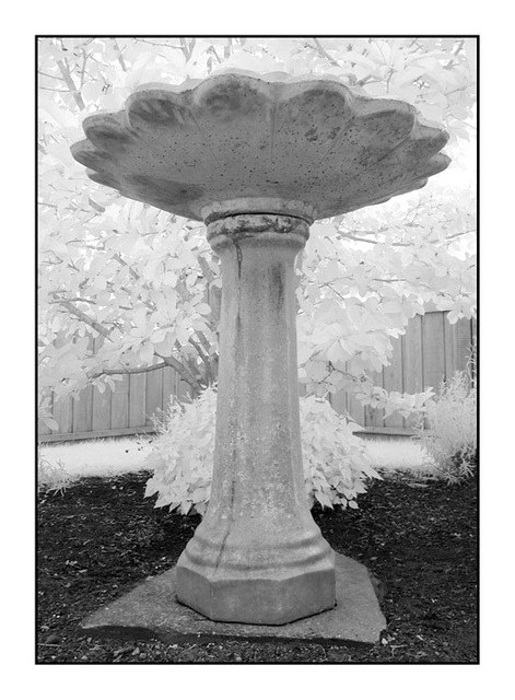 Infra Bird Bath Infrared photography