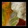 s700 macro - Close-Up Photography