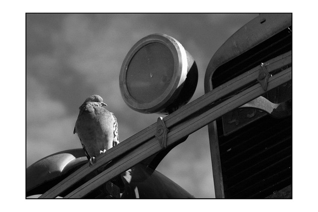 bird upon old car Black & White and Sepia
