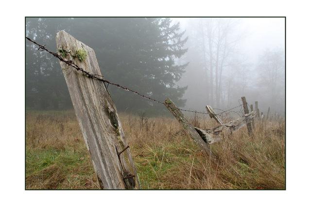 old fog fence Nature Images
