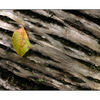leaf on bark - Close-Up Photography