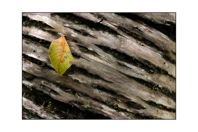 leaf on bark Close-Up Photography