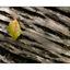 leaf on bark - Close-Up Photography
