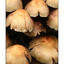 mushroooooms - Close-Up Photography