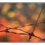 barbwire - 35mm photos