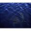 under water plant - 35mm photos